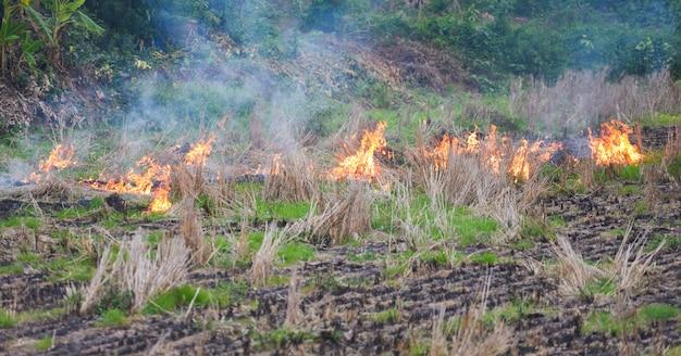 Brucia un'agricoltura agricola l'agricoltore usa il fuoco brucia le stoppie sul campo fumo che provoca foschia con inquinamento atmosferico da smog causa del concetto di riscaldamento globale, incendi boschivi e da campo ustioni da erba secca
