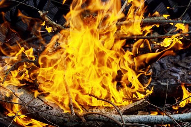 Bruciatura dell'erba secca sottile durante il fuoco incendiario, primo piano