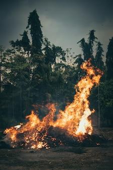 Bruciatura di alberi all'aperto nella foresta
