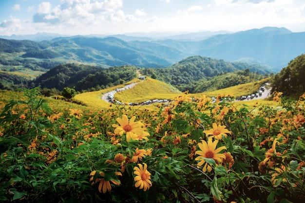 Bua tong fiore sulla collina.