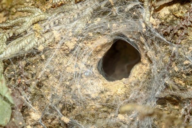 Buco del ragno nel suolo alla foresta