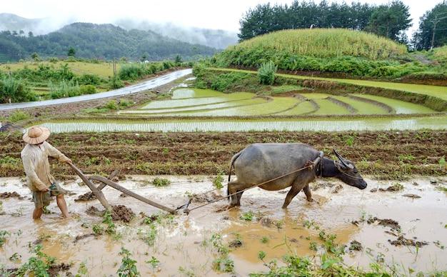 Bufalo contadino e tiller