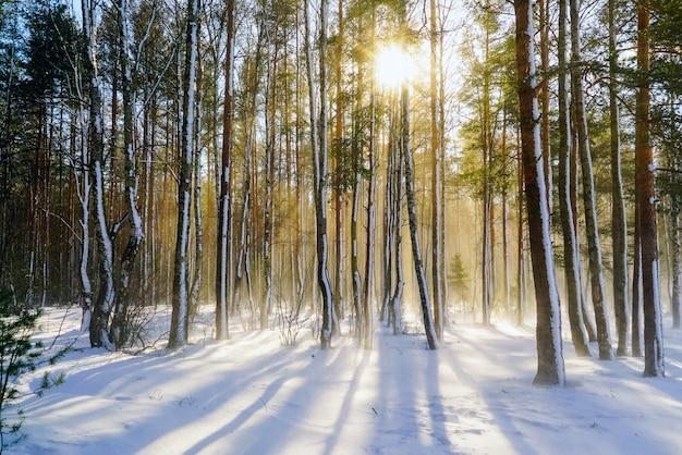 Bufera di neve nella foresta di inverno con alberi innevati in una luminosa giornata di sole