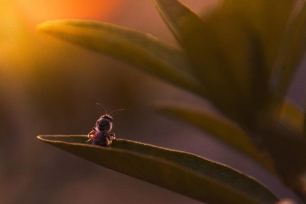 Bug in piedi su foglia in attesa