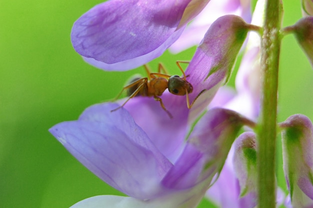 Bug in una pianta