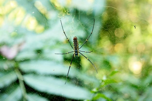 Bug sullo sfondo della natura