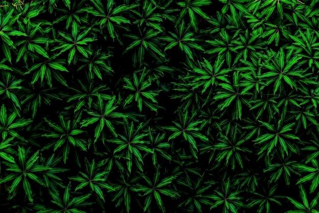 Buio di tono di colore delle foglie verdi di mattina ambiente, natura di concetto della foto e pianta.