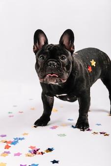 Bulldog adorabile che posa con gli elementi del partito