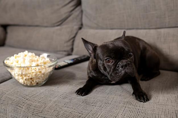 Bulldog francese cane, sul divano, con popcorn, con una faccia triste