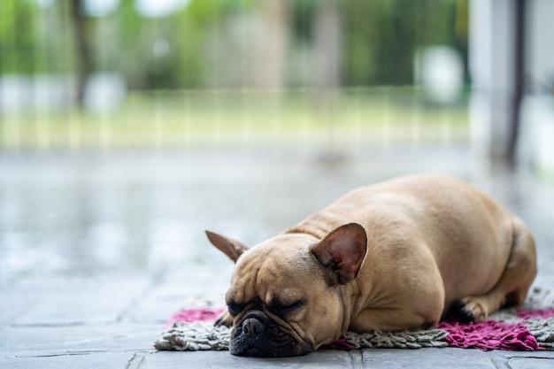 Bulldog francese sveglio che si trova sulla stuoia bianca all'aperto