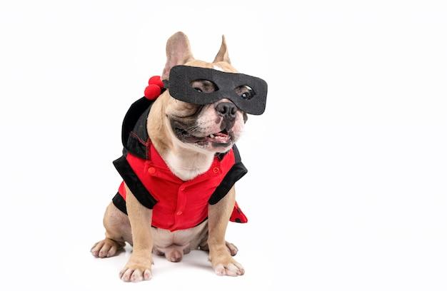 Bulldog francese sveglio con un costume dell'eroe eccellente isolato su bianco