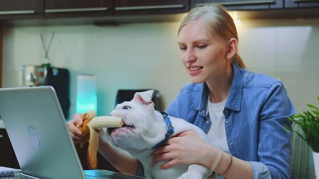 Bulldog sveglio che mangia banana che si siede sulle ginocchia della donna davanti al computer