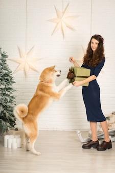 Buon natale e felice anno nuovo! la ragazza regala un regalo di natale in scatola al suo cane akita inu