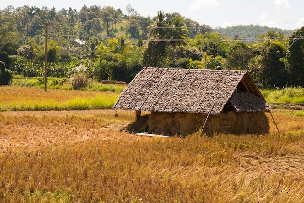 Cabina nell'azienda agricola delle risaie