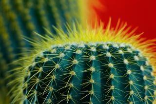 Cactus alone