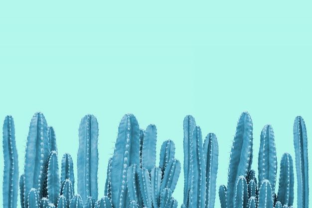 Cactus blu su sfondo turchese