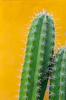 Cactus con spine taglienti, copia spazio.