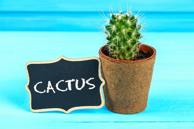 Cactus davanti al bordo di gesso dell'aula. torna al concetto di scuola con spazio di copia.