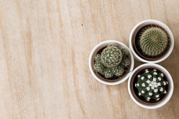 Cactus dell'albero su un fondo di legno con spazio