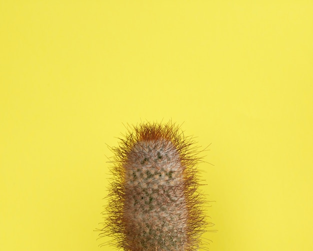 Cactus fashion design. stillife minimal fashion. colori vivaci alla moda.