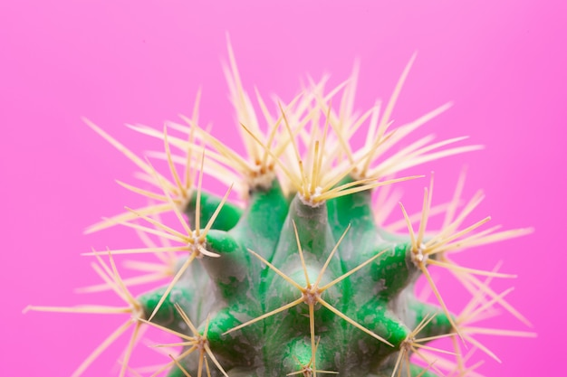 Cactus fashion design