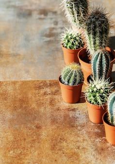 Cactus in una pentola