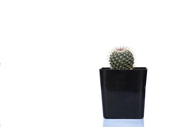 Cactus isolato aloe e altre piante grasse in vaso.