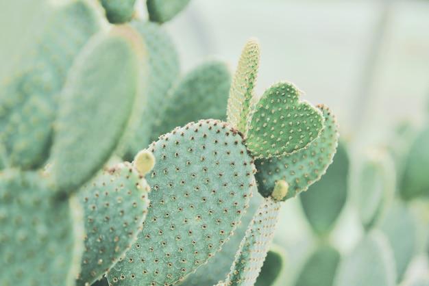 Cactus nel giardino botanico della regina sirikit