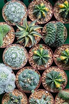 Cactus nel mercato dei fiori