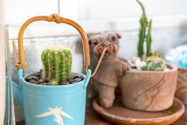 Cactus piantato in vaso