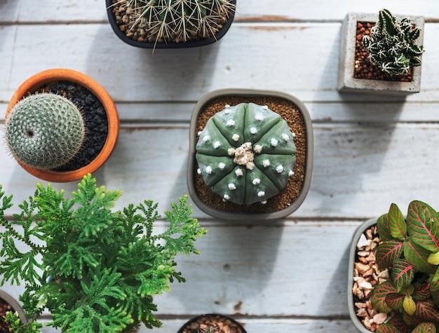 Cactus piccoli su un tavolo