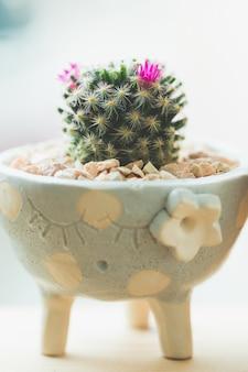 Cactus succulento in una pentola di ceramica
