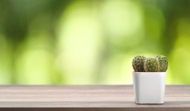 Cactus sulla scrivania in legno