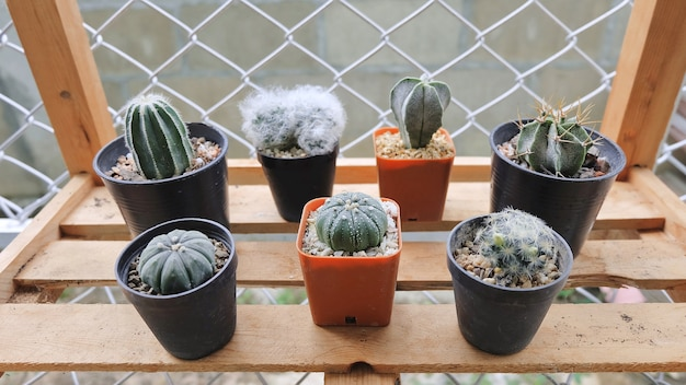 Cactus sullo scaffale di legno, succulente, cactus cactus, cactaceae, albero, pianta resistente alla siccità.