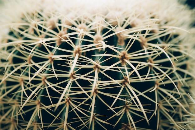 Cactus verde pianta verde succulenta.