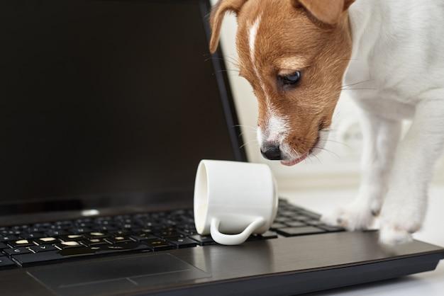 Caffè rovesciato cane sulla tastiera del computer portatile del computer. danneggiamento della proprietà dell'animale domestico