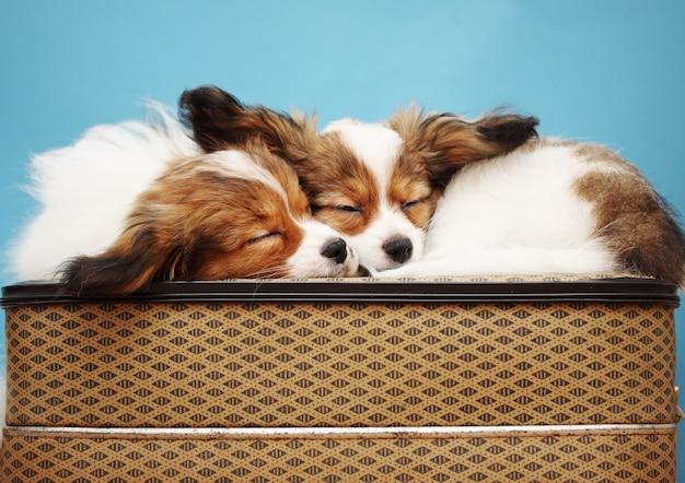 Cagnolini che dormono insieme