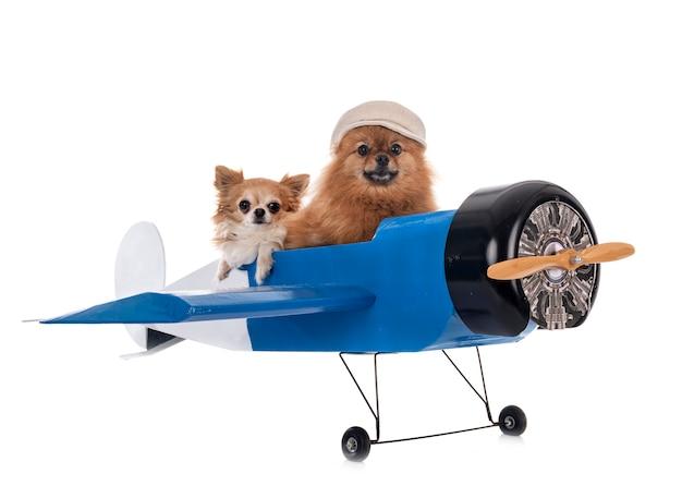 Cagnolini e aereo