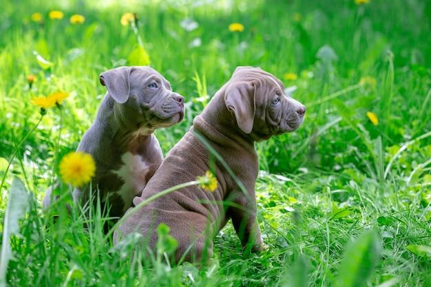 Cagnolini svegli che si siedono fra i fiori gialli