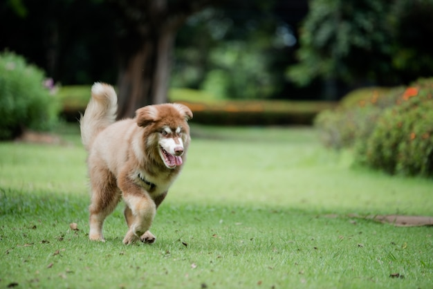 Cagnolino in un parco all'aperto. ritratto di stile di vita.