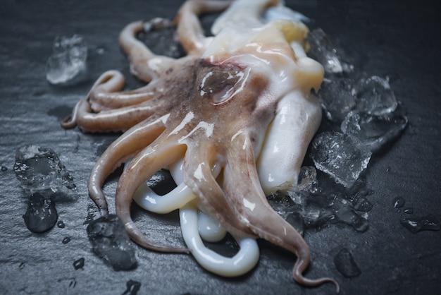 Calamari di pesce sul ghiaccio. calamaro crudo gastronomico dell'oceano fresco del polipo con ghiaccio su fondo scuro nel ristorante