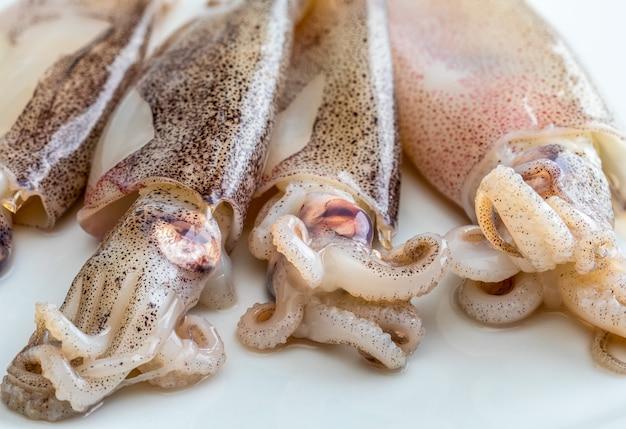 Calamari molto freschi appena pescati nel mare