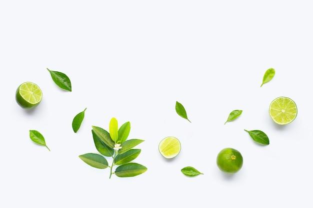 Calce con le foglie isolate su fondo bianco.