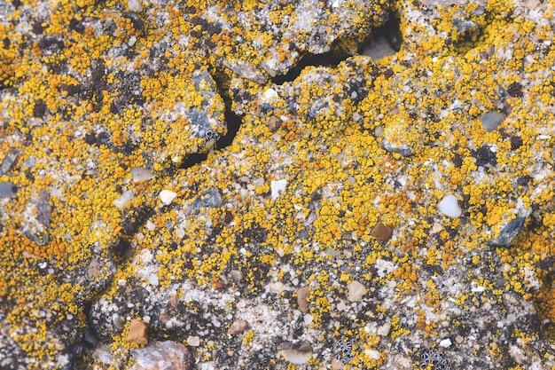 Calcestruzzo ricoperto di licheni e muschio