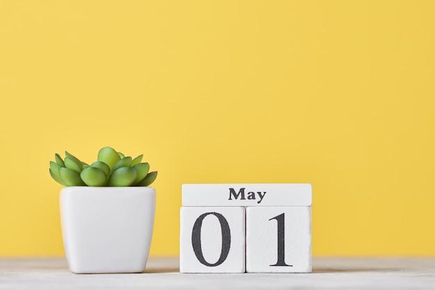 Calendario di blocco di legno con data 1 maggio e pianta succulenta in vaso su sfondo giallo. concetto di festa del lavoro