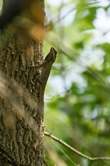 Camaleonte marrone sui rami degli alberi.