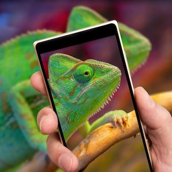 Camaleonte verde sullo schermo dello smartphone.