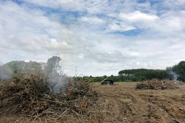 Cambiamenti climatici e riscaldamento globale gli alberi in fiamme