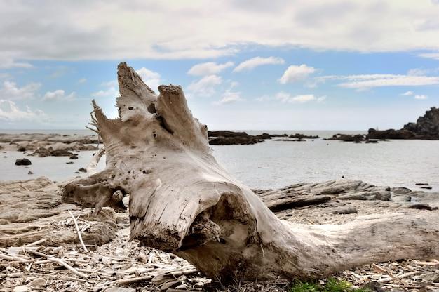 Camion dell'albero guidato sulla riva