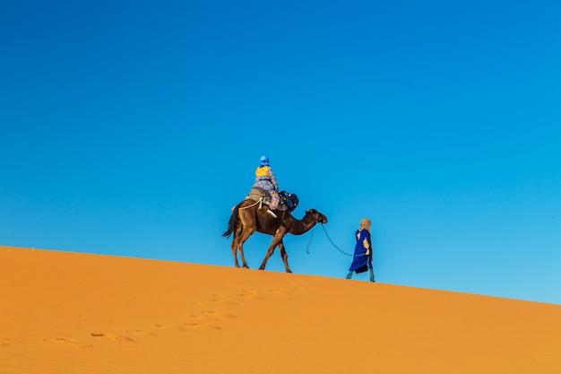 Cammelliere con un cammello all'alba nel deserto del sahara.